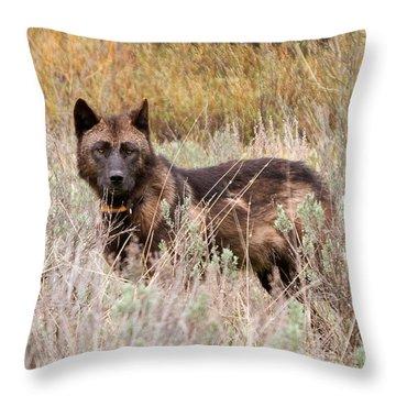 Teton Wolf Throw Pillow by Steve Stuller