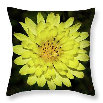 Texas Dandelion Throw Pillow