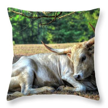 Texas Longhorn Gentle Giant Throw Pillow
