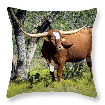 Throw Pillow featuring the photograph Texas Longhorn Steer by David Morefield