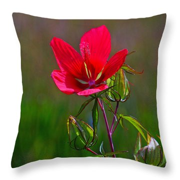 Texas Star Hibiscus Throw Pillow