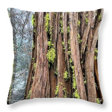 Throw Pillow featuring the photograph Texturing by Paul Foutz