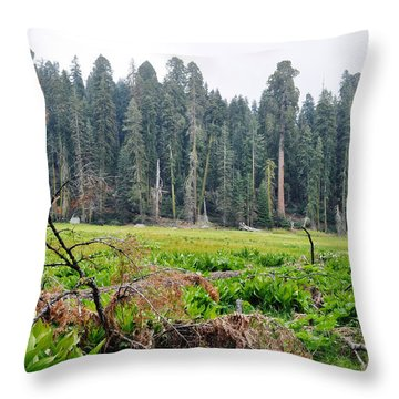 Throw Pillow featuring the photograph Tharps Log Meadow by Kyle Hanson