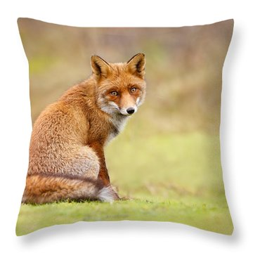 That Look - Red Fox Male Throw Pillow by Roeselien Raimond