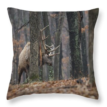 That's The Spot Throw Pillow by Andrea Silies