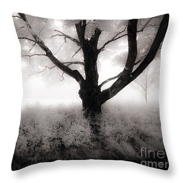 Throw Pillow featuring the photograph The Ancient Tree by Craig J Satterlee