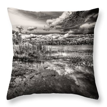The Basin And Snails Throw Pillow by Bob Orsillo