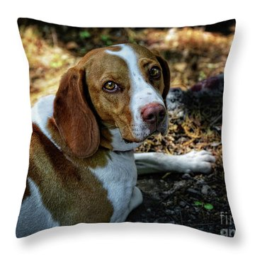 The Beagle With Bright Eyes Throw Pillow by Stephan Grixti