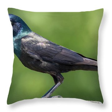 Throw Pillow featuring the photograph The Beautiful Common Grackle by Ricky L Jones