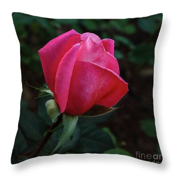 The Beautiful Rose Bud Throw Pillow