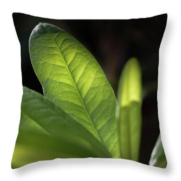 The Beauty Of A Leaf - Throw Pillow