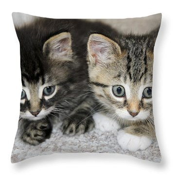 The Best Buddies Throw Pillow by Teresa Zieba