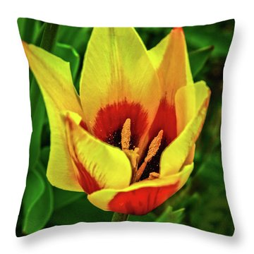 Throw Pillow featuring the photograph The Bicolor Tulip by Robert Bales