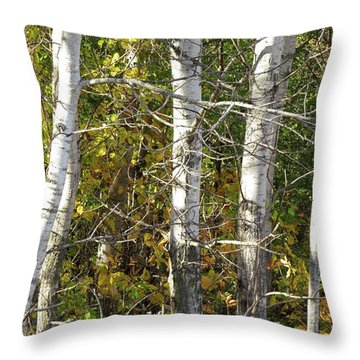 The Birches Throw Pillow by Kimberly Mackowski
