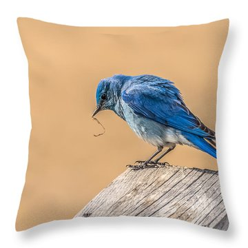 Throw Pillow featuring the photograph The Bluebird Of Spring by Yeates Photography