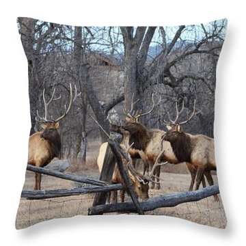 Throw Pillow featuring the photograph The Boys by Billie Colson