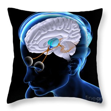 The Brain And Sight Throw Pillow
