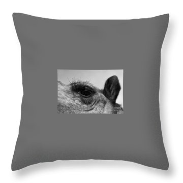 The Camels Eye  Throw Pillow