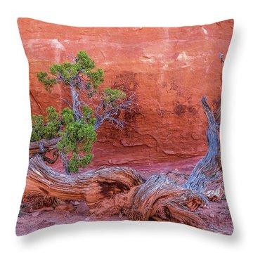 The Canyon Wall Juniper Throw Pillow