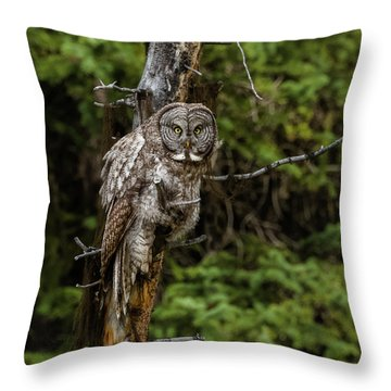 The Captivating Great Grey Owl Throw Pillow by Yeates Photography