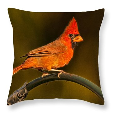 Throw Pillow featuring the photograph The Cardinal by Don Durfee