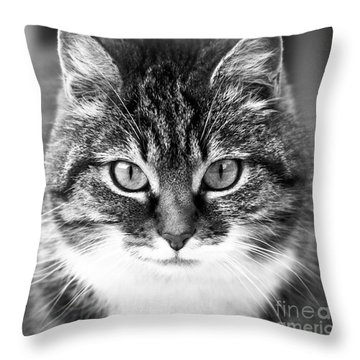 The Cat Stare Down Throw Pillow
