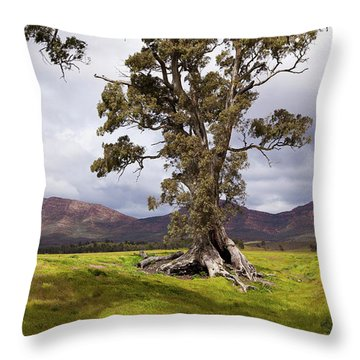 Throw Pillow featuring the photograph The Cazneaux Tree by Bill Robinson