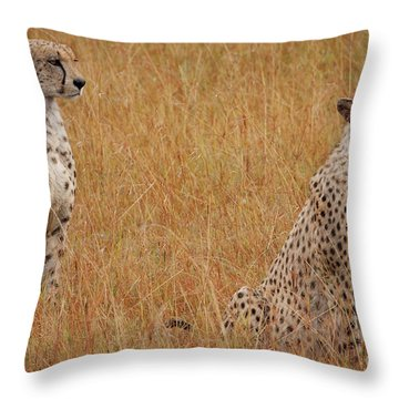 The Cheetahs Throw Pillow by Nichola Denny