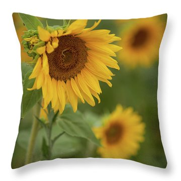 The Close Up Of Sunflowers Throw Pillow
