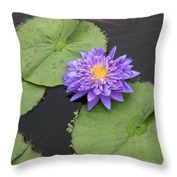 Throw Pillow featuring the photograph The Color Of Splendor by David Dunham