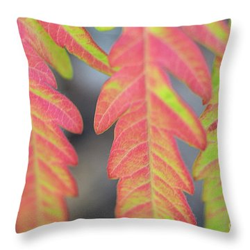 The Colors Of Shumac 8 Throw Pillow