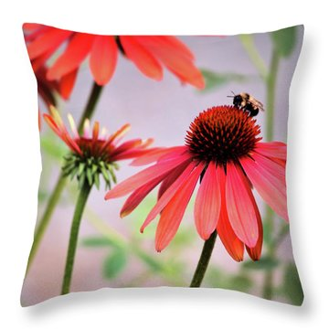 The Coneflower Collection Throw Pillow