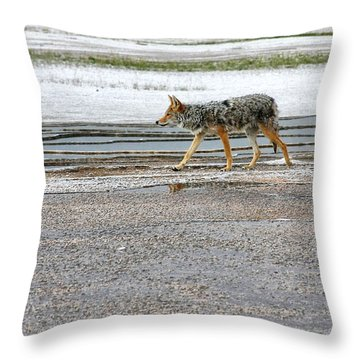 The Coyote - Dogs Are By Far More Dangerous Throw Pillow by Christine Till