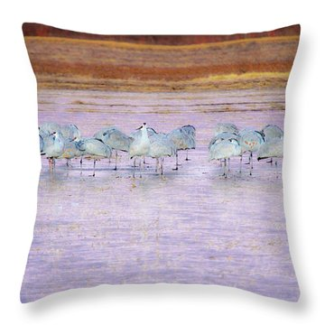 The Cranes Of Bosque Throw Pillow