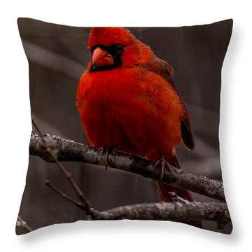The Crimson Suit Throw Pillow
