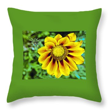 Throw Pillow featuring the photograph The Daisy by Matthew Bamberg