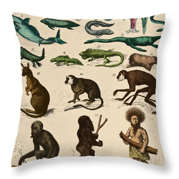 The Descent Of Man, Ernst Haeckel, 1871 Throw Pillow by Science Source