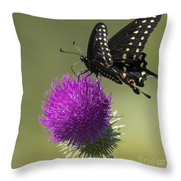 The Eastern Black Swallowtail  Throw Pillow