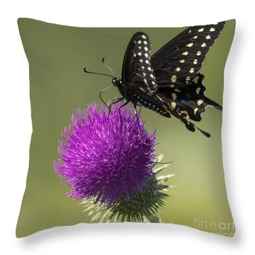 The Eastern Black Swallowtail  Throw Pillow
