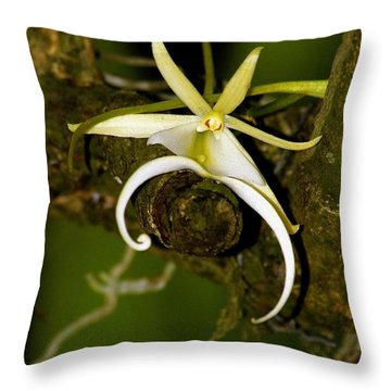 The Elusive And Rare Ghost Orchid Throw Pillow