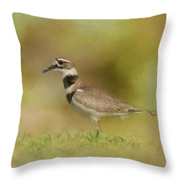 The Elusive Killdeer Throw Pillow by Jai Johnson