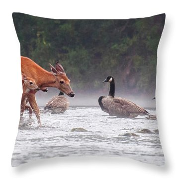 The Encounter Throw Pillow