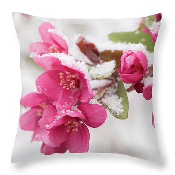 Throw Pillow featuring the photograph The End Of Winter by Ana V Ramirez