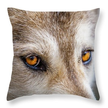 Throw Pillow featuring the photograph The Eyes Of A Great Grey Wolf by Teri Virbickis