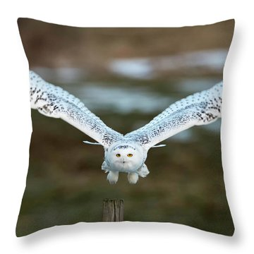 The Eyes Of Intent Throw Pillow