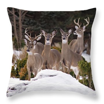 Throw Pillow featuring the photograph The Family by Angel Cher