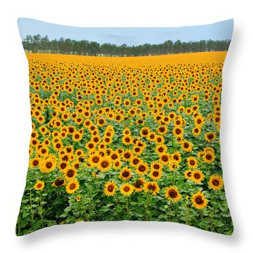 The Field Of Suns Throw Pillow