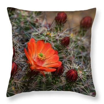 Throw Pillow featuring the photograph The First Bloom  by Saija Lehtonen