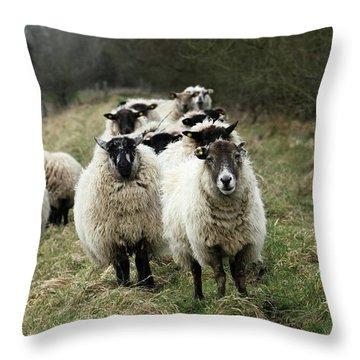 The Flock 2 Throw Pillow