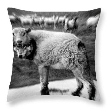 The Flock Is Safe Grayscale Throw Pillow by Marian Voicu